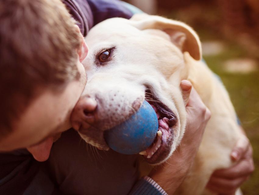Emmène ton chien, le site communautaire qui veut du bien à vos animaux !